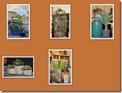 Plant Blog 2