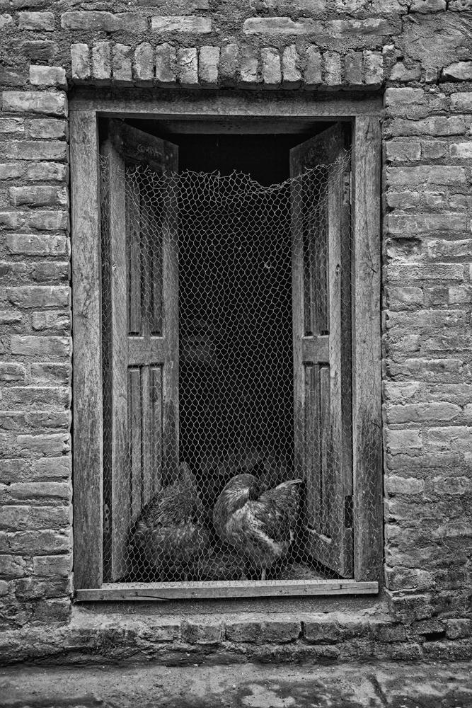 Peter Mercieca Bungamati Nepal 7296 .jpg