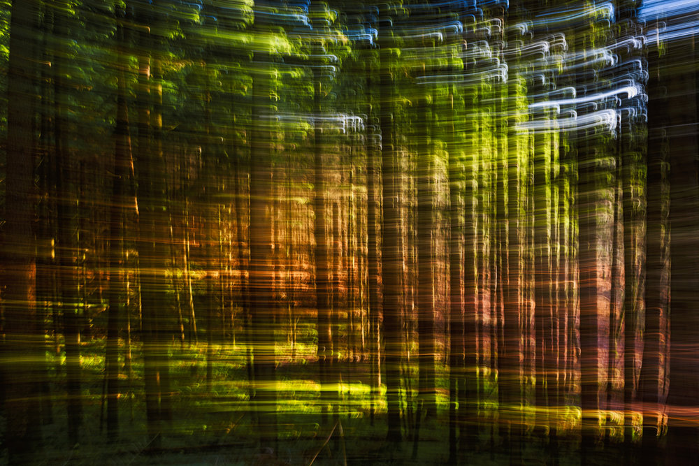 Nature Abstraction 9043.jpg
