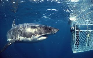 SHARK CAGE TOUR OPERATORS+