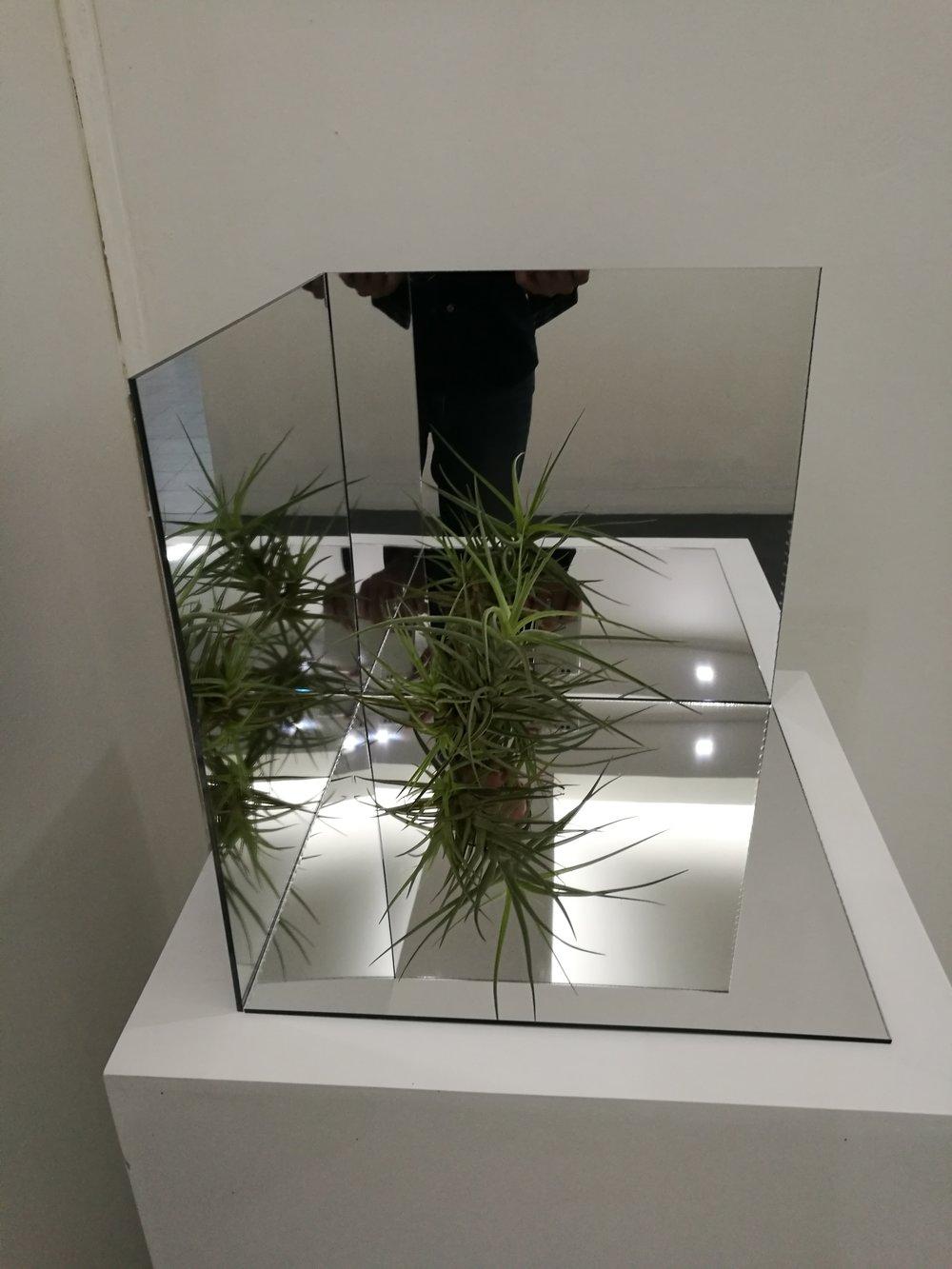 alejandro medina - project room 12.jpg