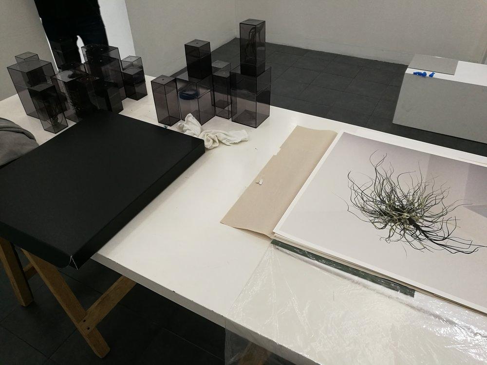 alejandro medina - project room 16.jpg