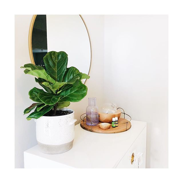 Diffusing Stress Away + Citrus Fresh like it's my job because we need all the mood lifting high vibes we can get around here ✌🏼🍊 Tell me what you're diffusing! . . . . . . #ariadiffuser #younglivingessentialoils #yleo #youngliving #diffuserrecipes #highvibes #fiddleleaffig #plantlife #plantlady #anthropologie #anthropologiehome #anthrohome #anthro #targetstyle #hearthandhand