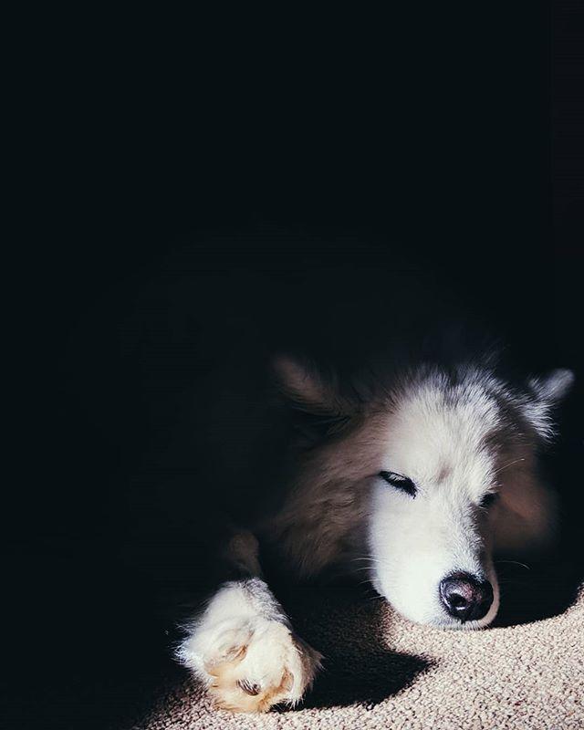 Sleepy Coco 💤