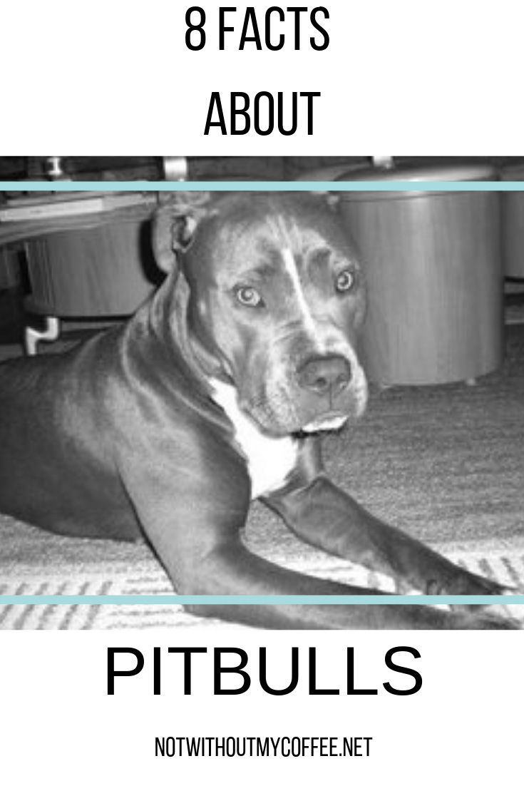 Not Without My Coffee- 8 Facts About Pitbulls.jpg