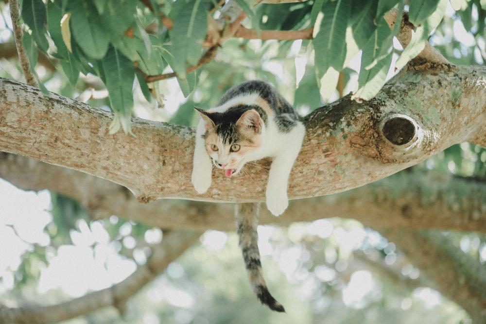 kitties (15 of 16)