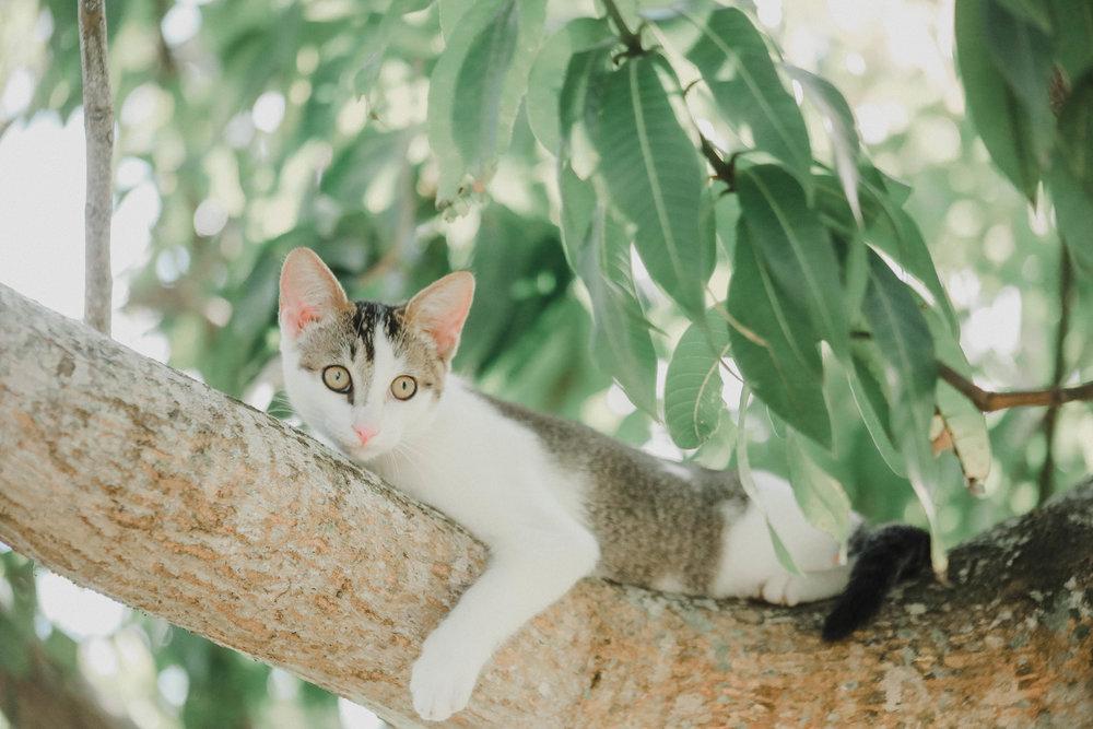 kitties (8 of 16)