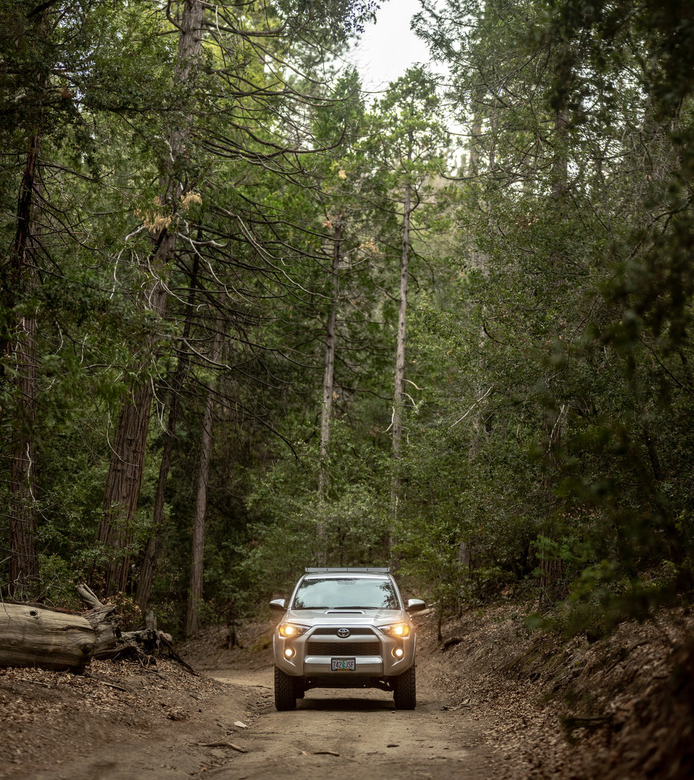 forest-toyota-4runner-dirt-road.jpg