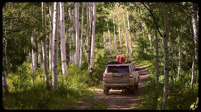 Cruising through the aspens in Utah. I think Utah is officially my new favorite state for outdoor adventures. Our great western trail documentary is coming along! #utahexperience #greatwesterntrail #4runner #aspenforest #aspens #lookslikefilm #cinematography #documentary #yotalife #filmgrain