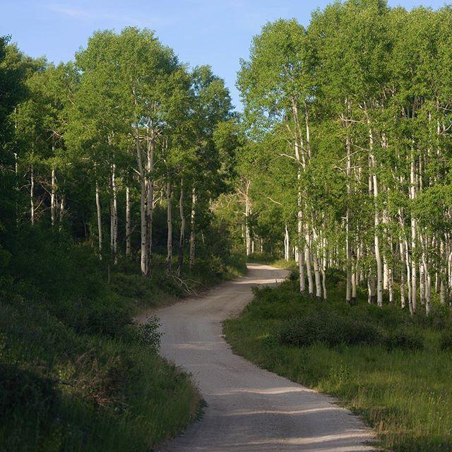 Winding roads at 10,000 ft. #dirtroad #dreamroads #getdirty #aspentrees #getoutdoors #exploreutah #overlandingusa #greatwesterntrail #softroadingthewest