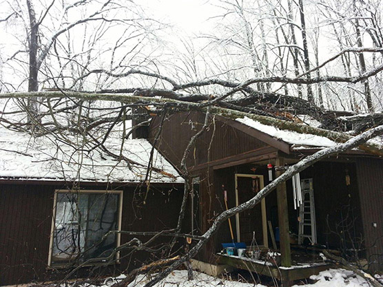 tree-damage-example.jpg