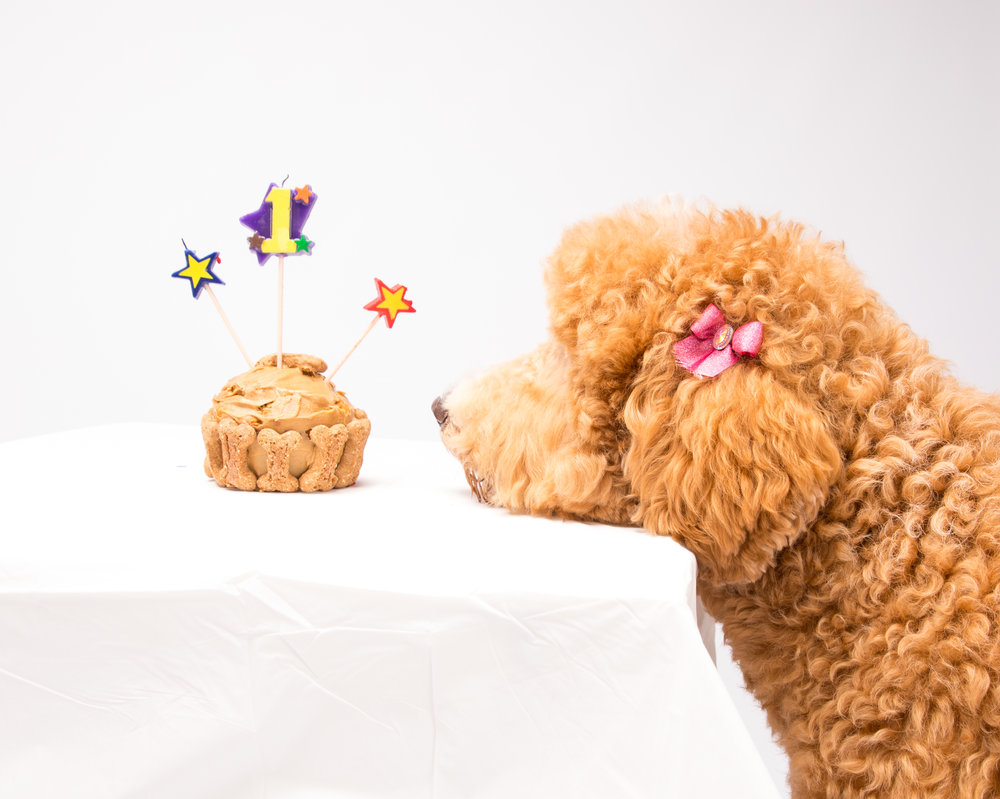 Lucys First Birthday Photoshoot Rusty Pup Photography