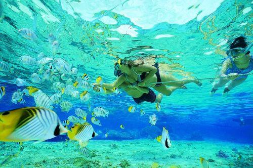 tamarindo-costa-rica-snorkeling.jpg