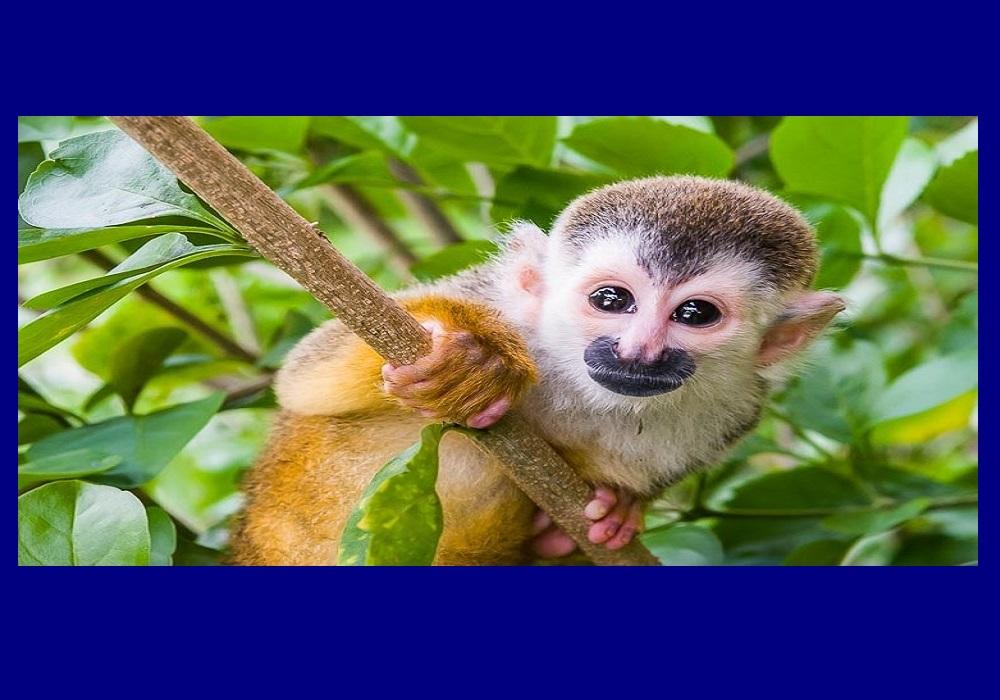 Costa Rica Monkey.jpg