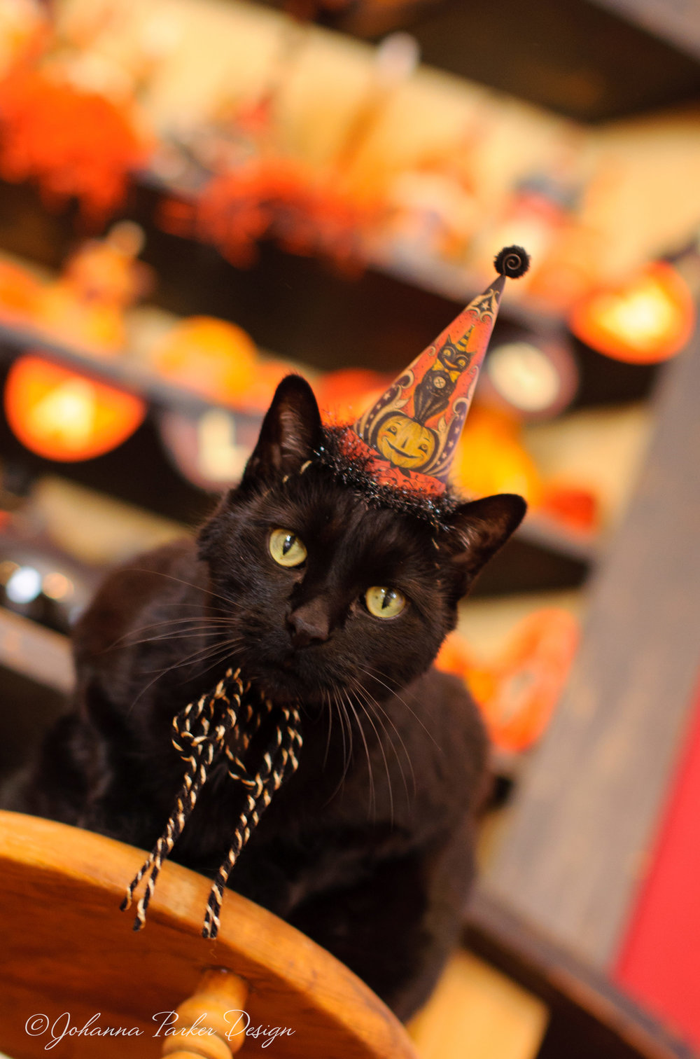 Halloween black cat & hat