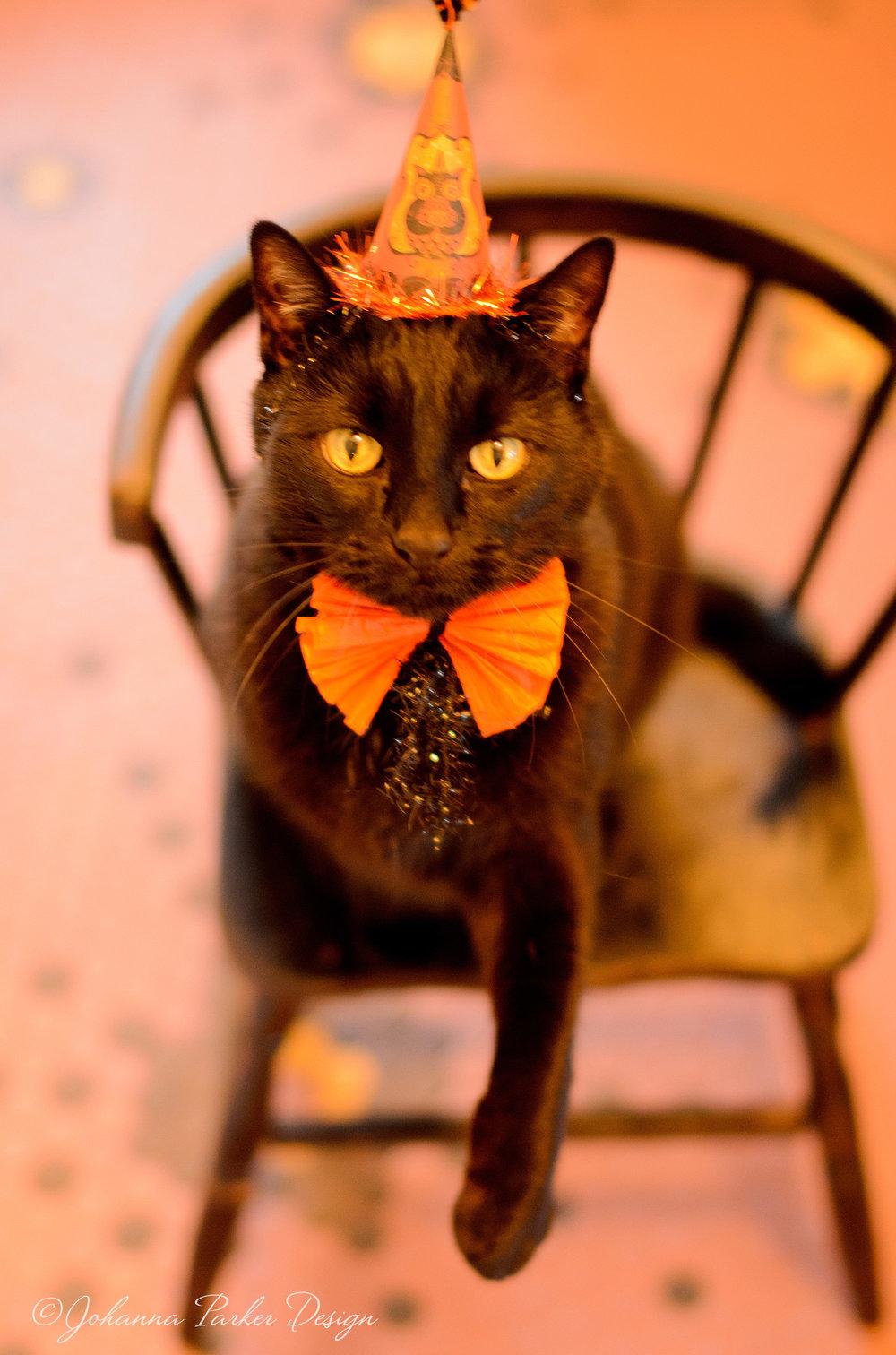 Dapper Halloween Jack the cat