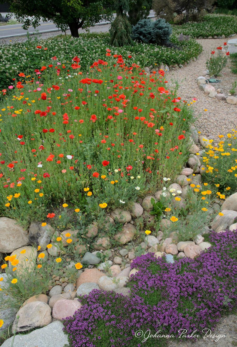 Poppy garden path