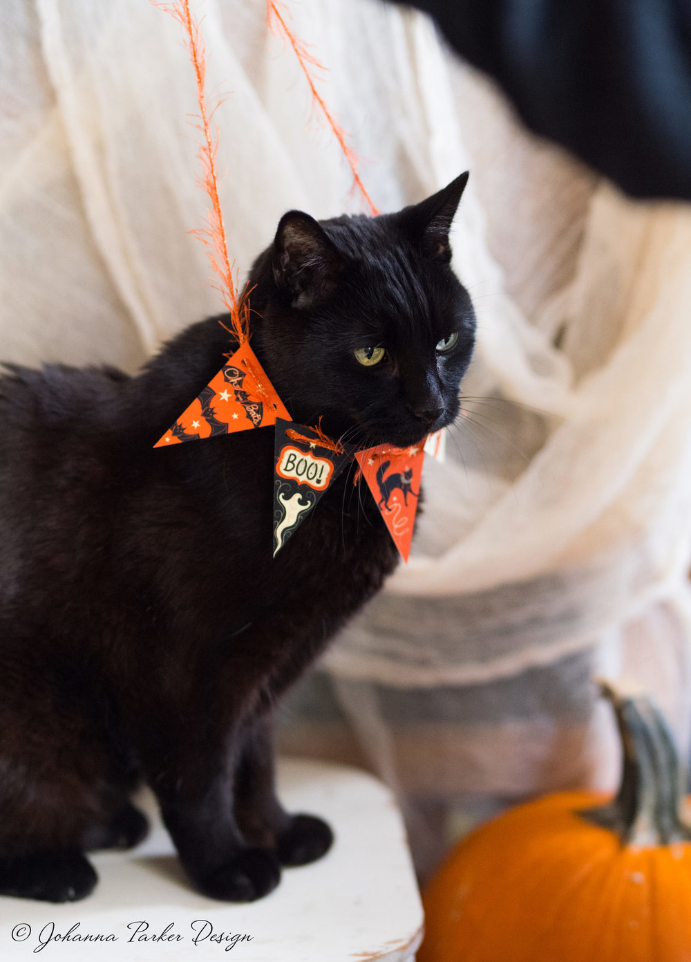 I'm readjusting his Halloween finery here... He didn't seem to mind one bit...