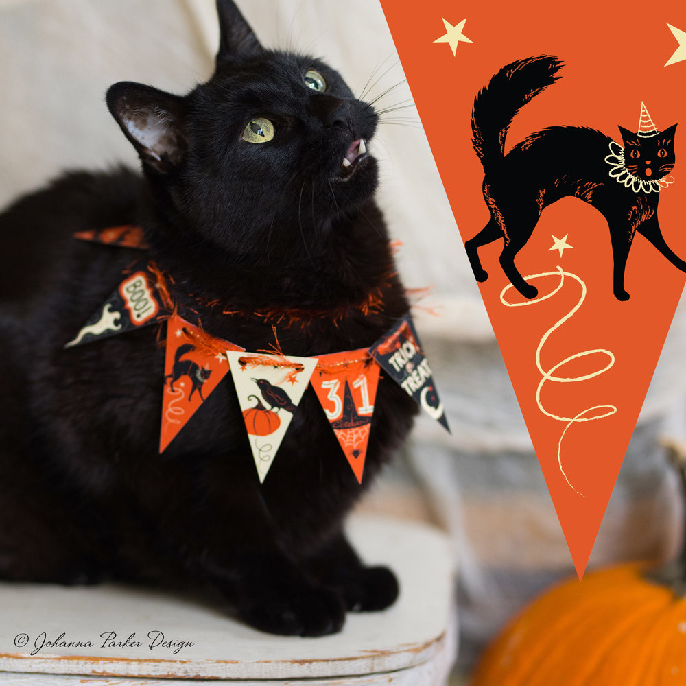 And, we'll end it with a touch of spookiness for Halloween! Hope you're not too scared! Thanks for stopping by for a little furry fun and behind the scenes black cat cuteness...