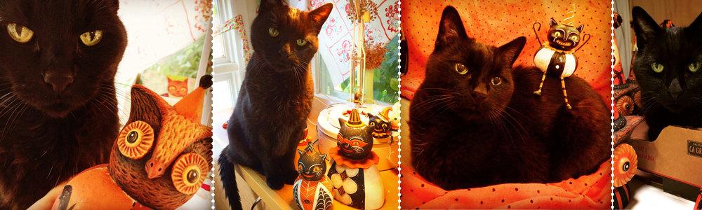 Jack-Cat-Banner.jpg