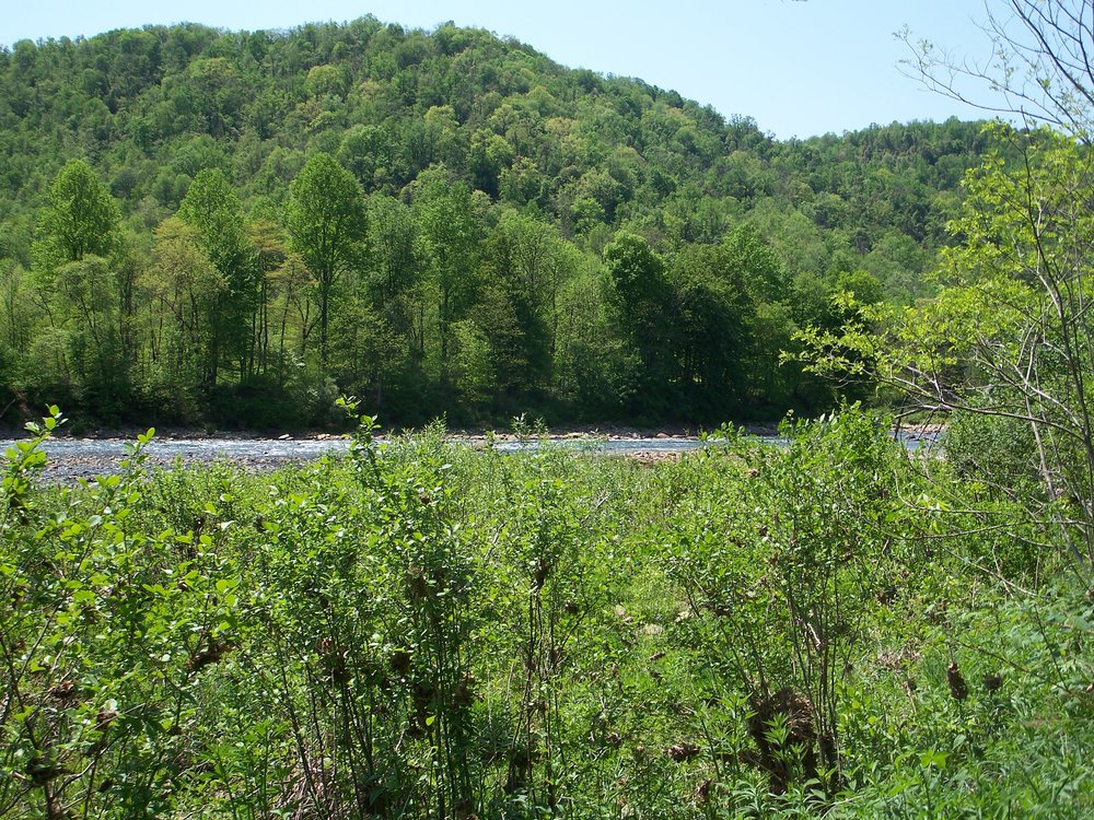 Cheat River near Albright along the ALT - By Doug Wood