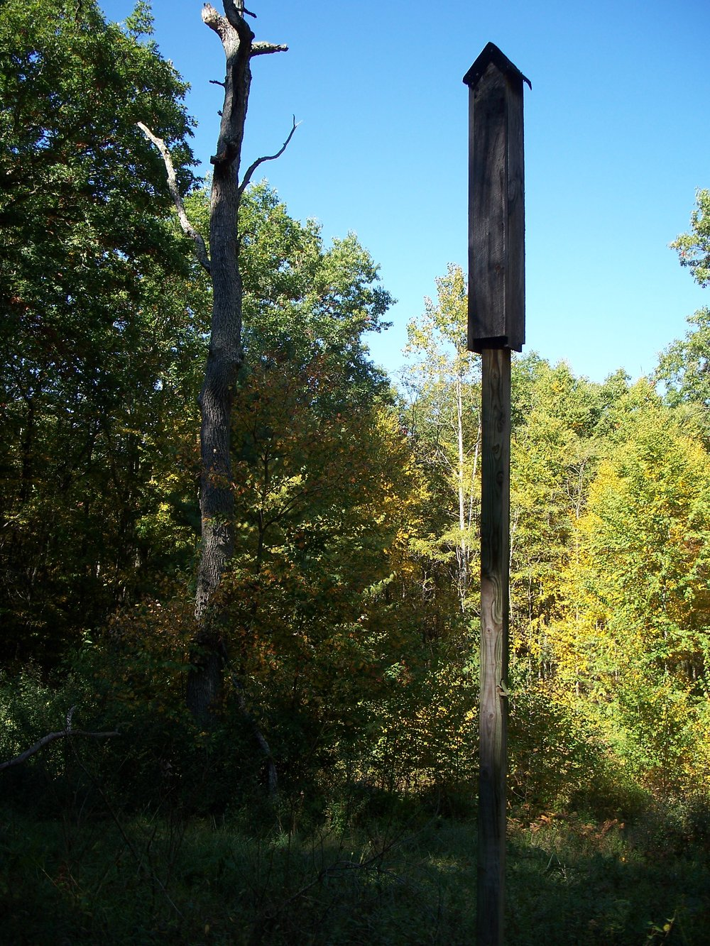 S3 Bat box on Buckley Mtn.jpg