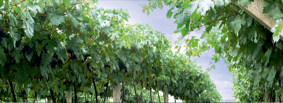 Bulgarian National Vine and Wine Chamber2.png