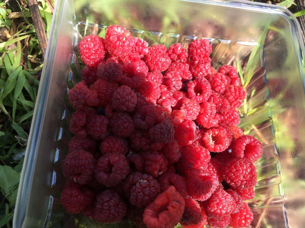 Raspberries - few but yummy!