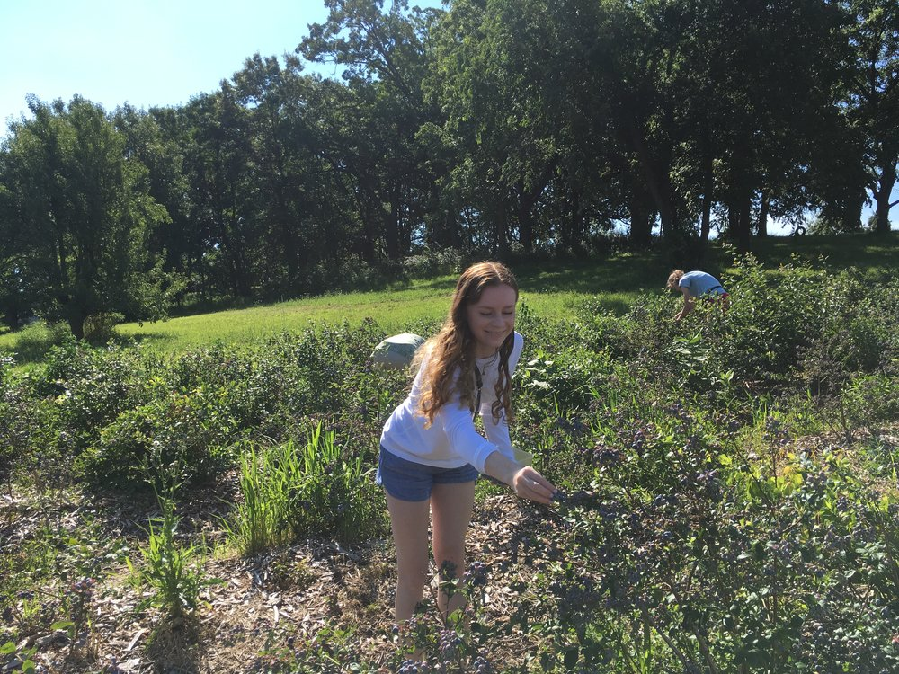 Sophia in the blueberries.