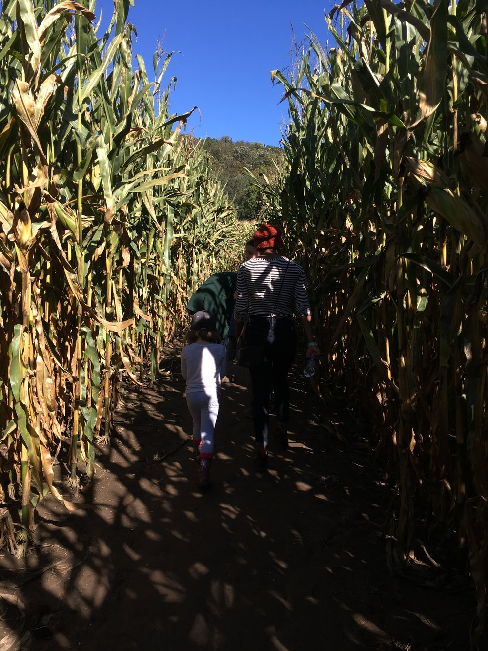 How many degrees does it take to get through the trilobite corn maze?