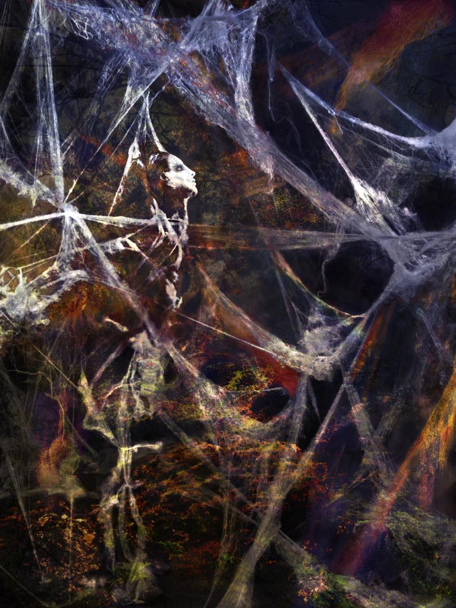 1_spiderweb.jpg