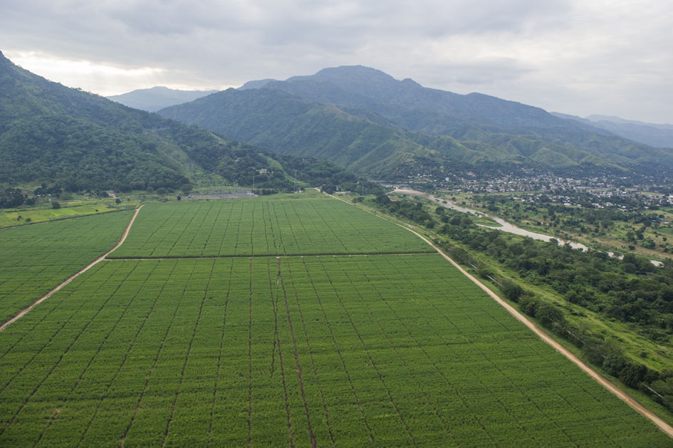 View of Kilombero Sugar Estate, Tanzania