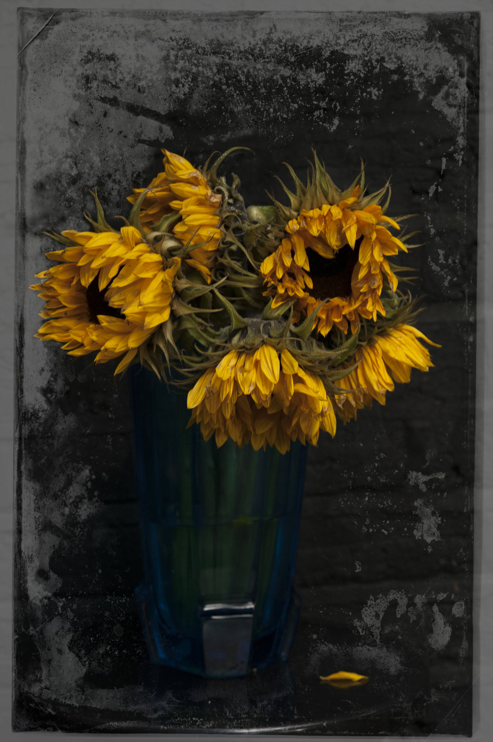 Sunflowersx copy.jpg