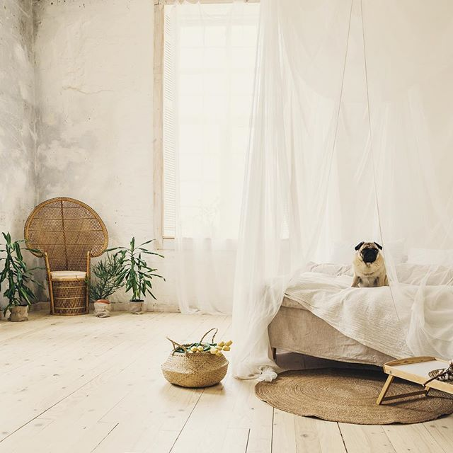 #mindfulmonday Words do have power, how many times have you said to yourself you can't have dessert, and all you really want then want is dessert 🍰 It got us wondering how that works with our beloved companions, and the choice of words we use with them...🐶💚 #hygge #mindfullness #pugs #pugsofinstagram #hyggehome #scandinaviandesign