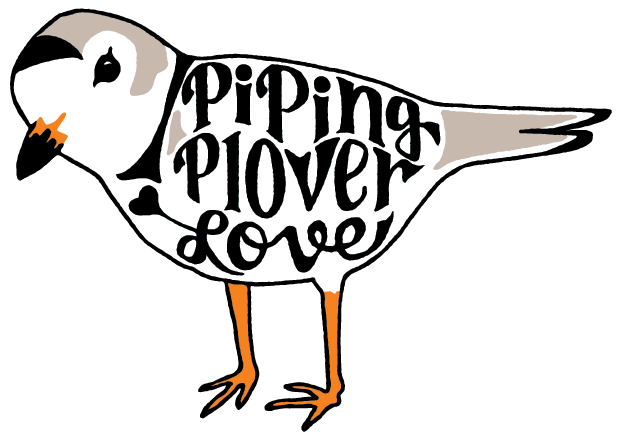 Piping Plover Love