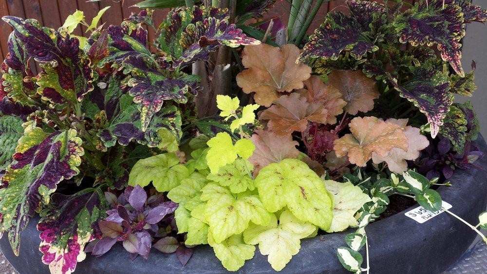 Zak Stebner - planter_foliage.jpg