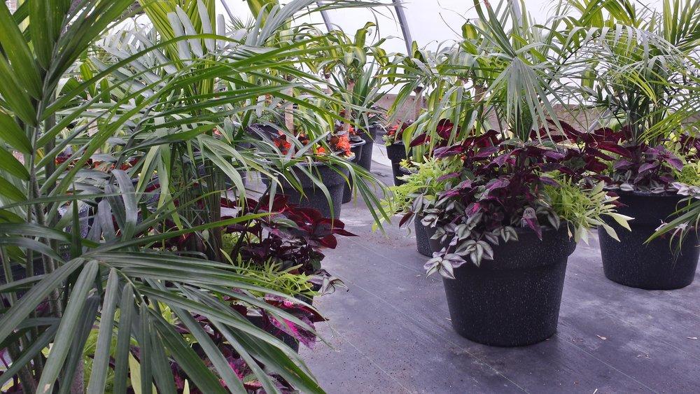 Zak Stebner - palmfern_planters.jpg