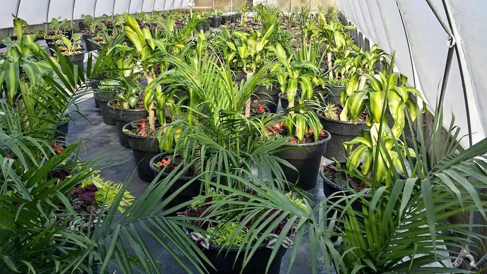 Zak Stebner - corporate greenhouse.jpg