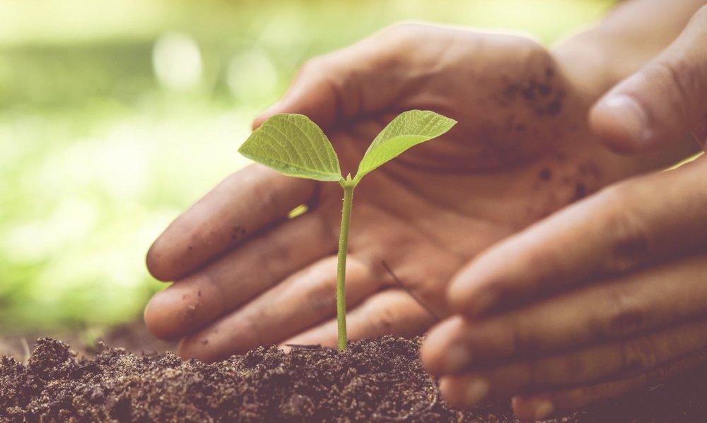 soil_veteran_healing.jpg