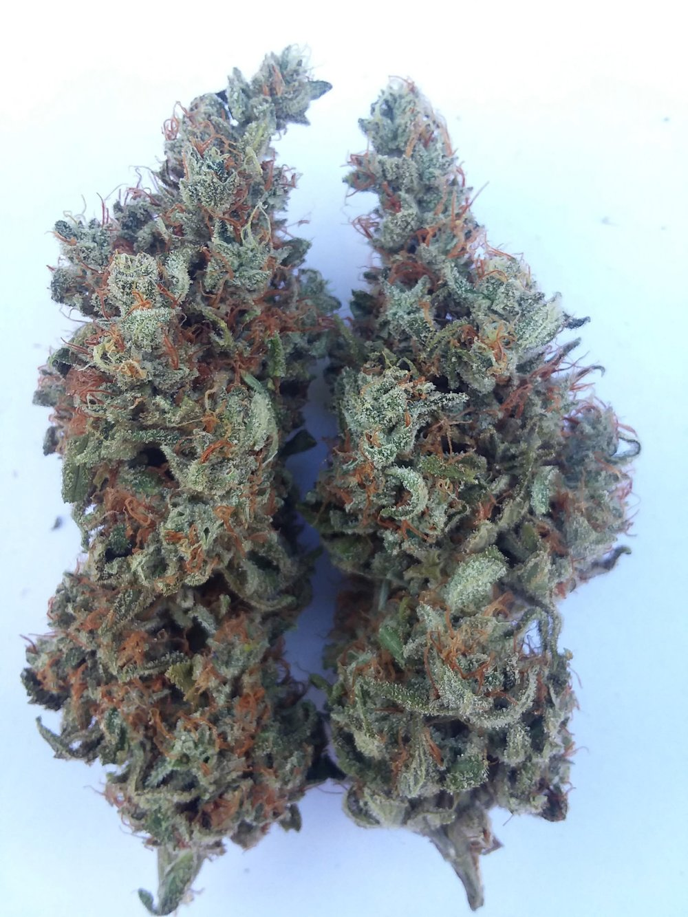 Mother of Berry - Lineage: UNKNOWN from Dirty Water Organics Location: Indoor/OutdoorType: Indica / SativaFlowering time: 8-9 weeks – 60 daysDescription: berry candy amazingness  Medical Value: Anti- anxiety, anti-depressant, good day or night smoke