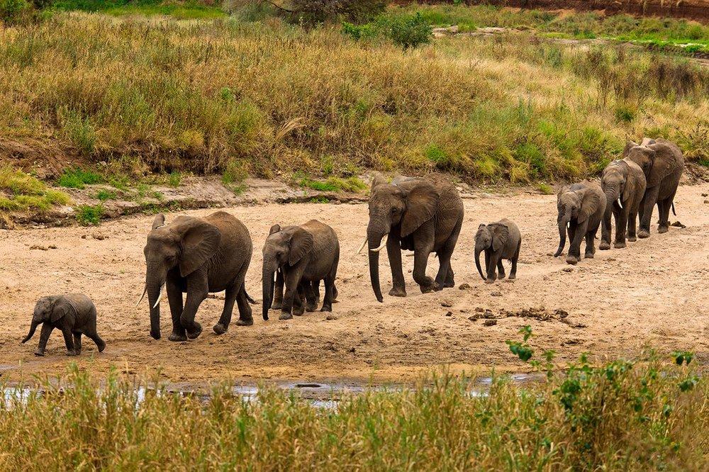 tanzania-tarangire-home-of-elephants.jpg