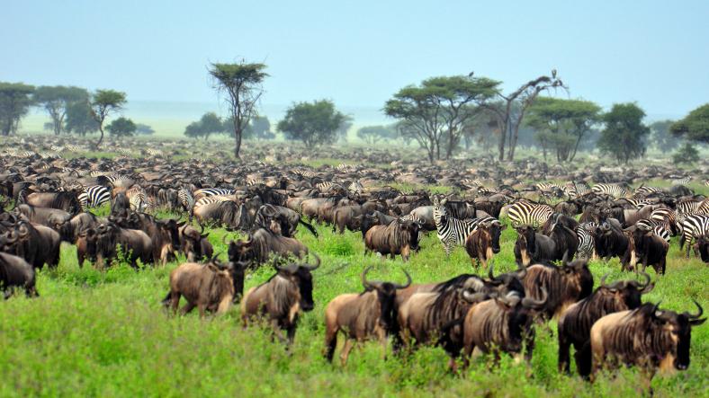 the-great-migration-at-serengeti-national-park-tanzania.jpg