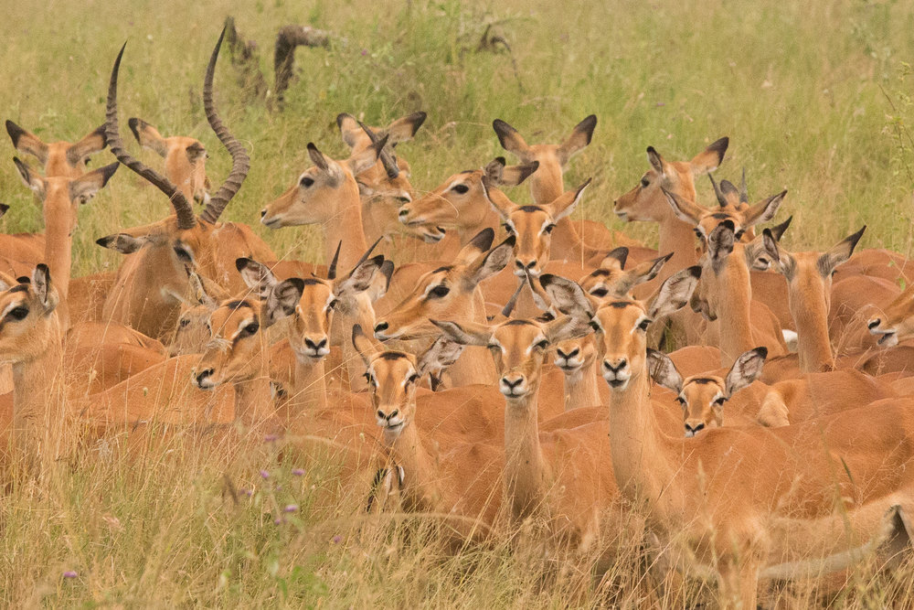 Serengeti-20160307-145.jpg