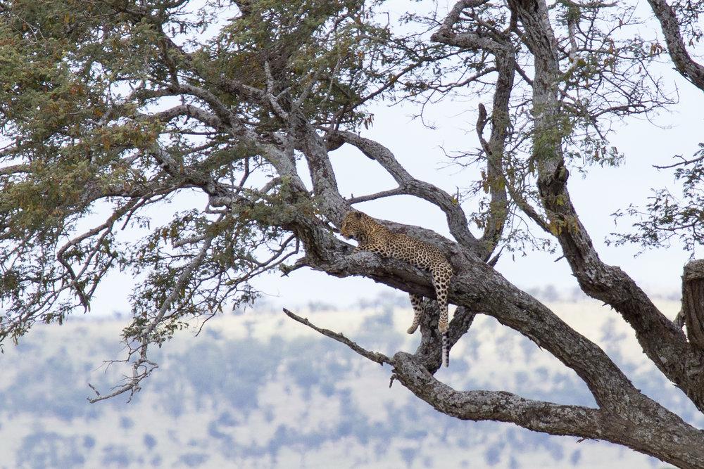 Serengeti-20160308-644.jpg