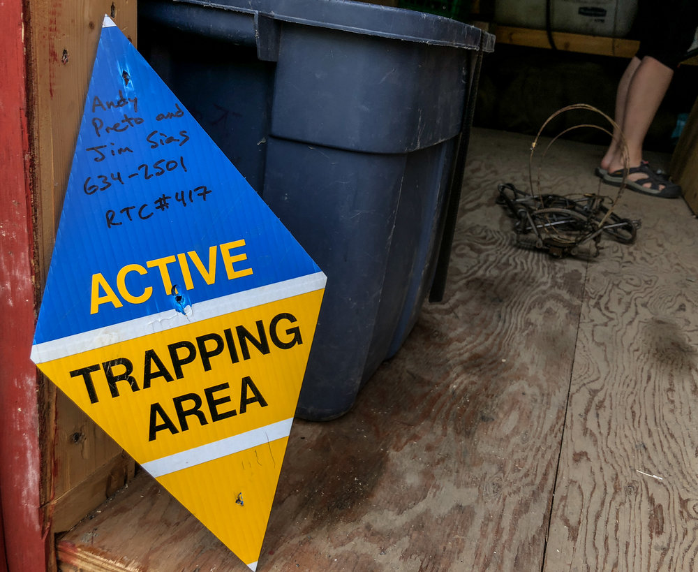 Preto says trapping signs are placed around a concession to alert people that traps are active in the area. Their reflective surface makes them easily visible in the dark winter months. Photo: Madison Ranta