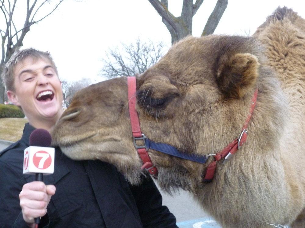 Camel-1.jpg