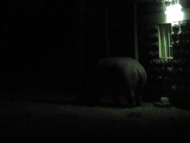 The_hippo_at_my_door