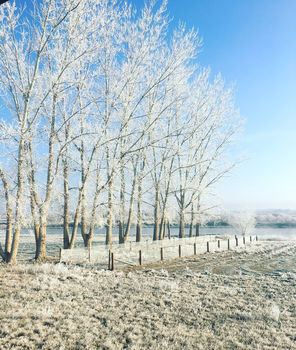 Winter in my backyard.