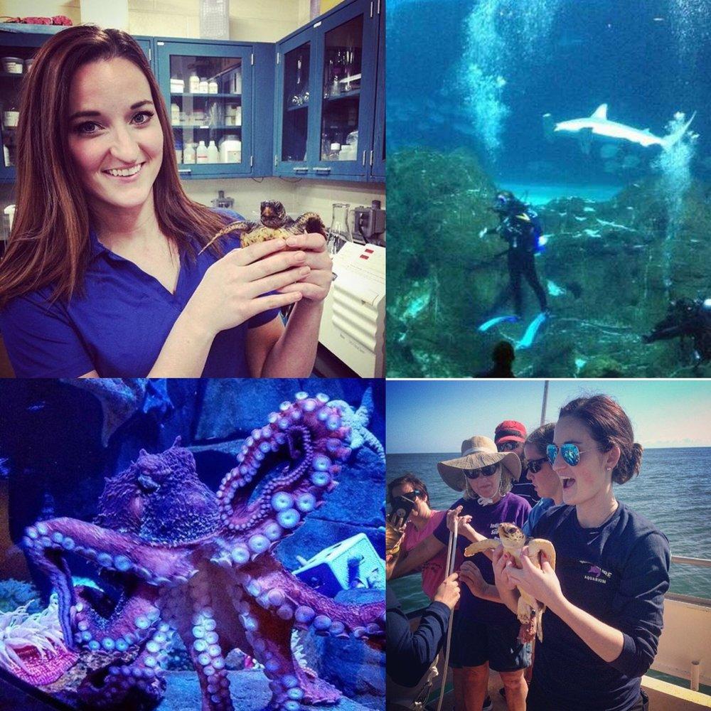 Sam Aquarium.jpg