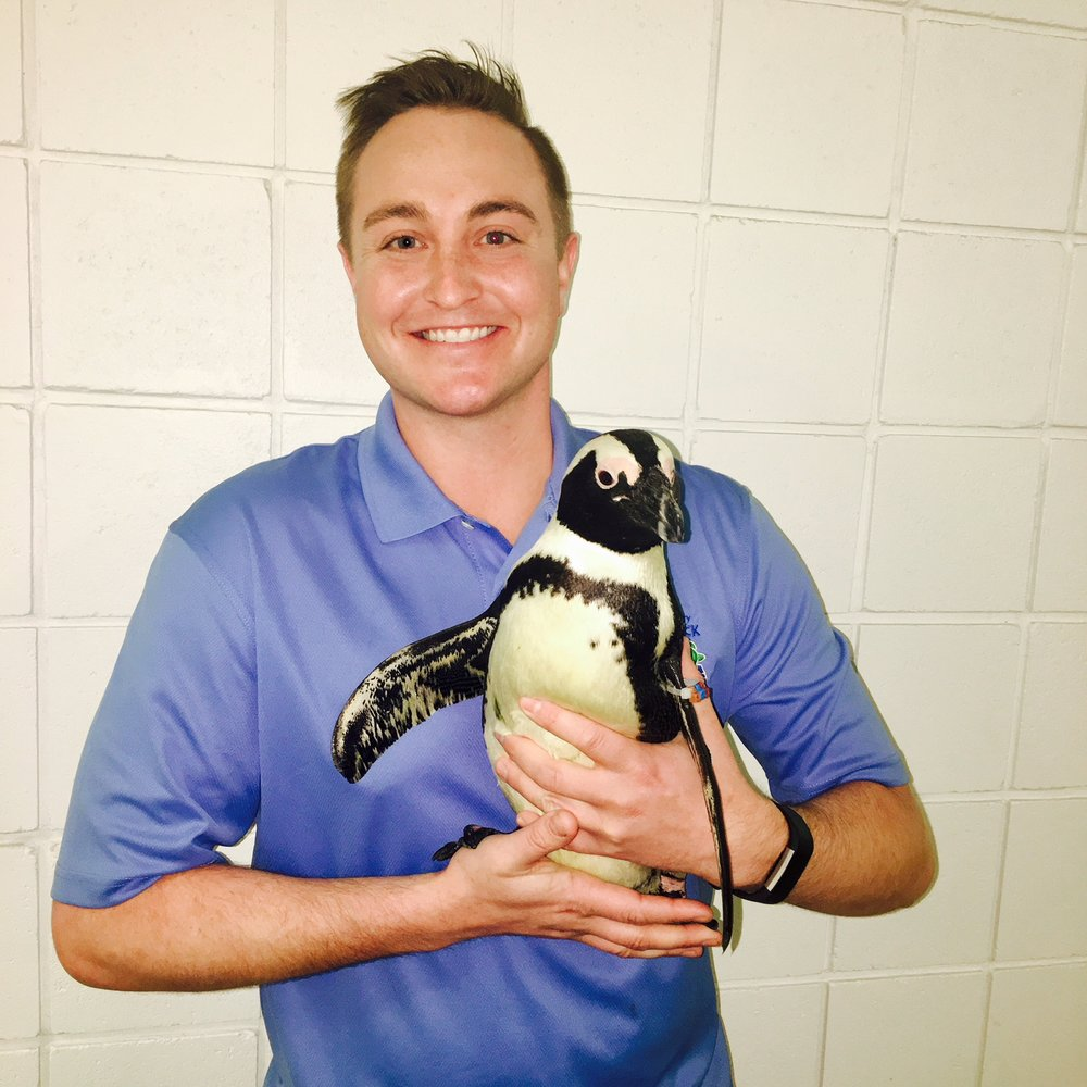 Filming at The Turtle Back Zoo in West Orange, New Jersey with Aurora the African Penguin.